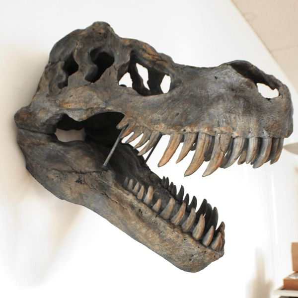 side view of Extra Large resin T-Rex Skull Wall Head Trophy Art